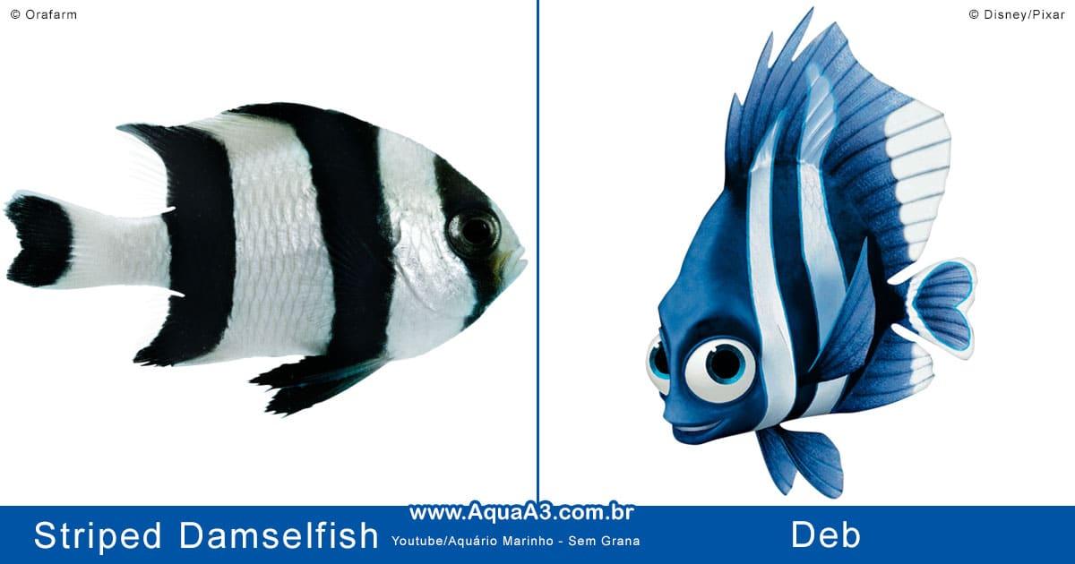 Deb é o Striped Damselfish (Dascyllus melanurus)