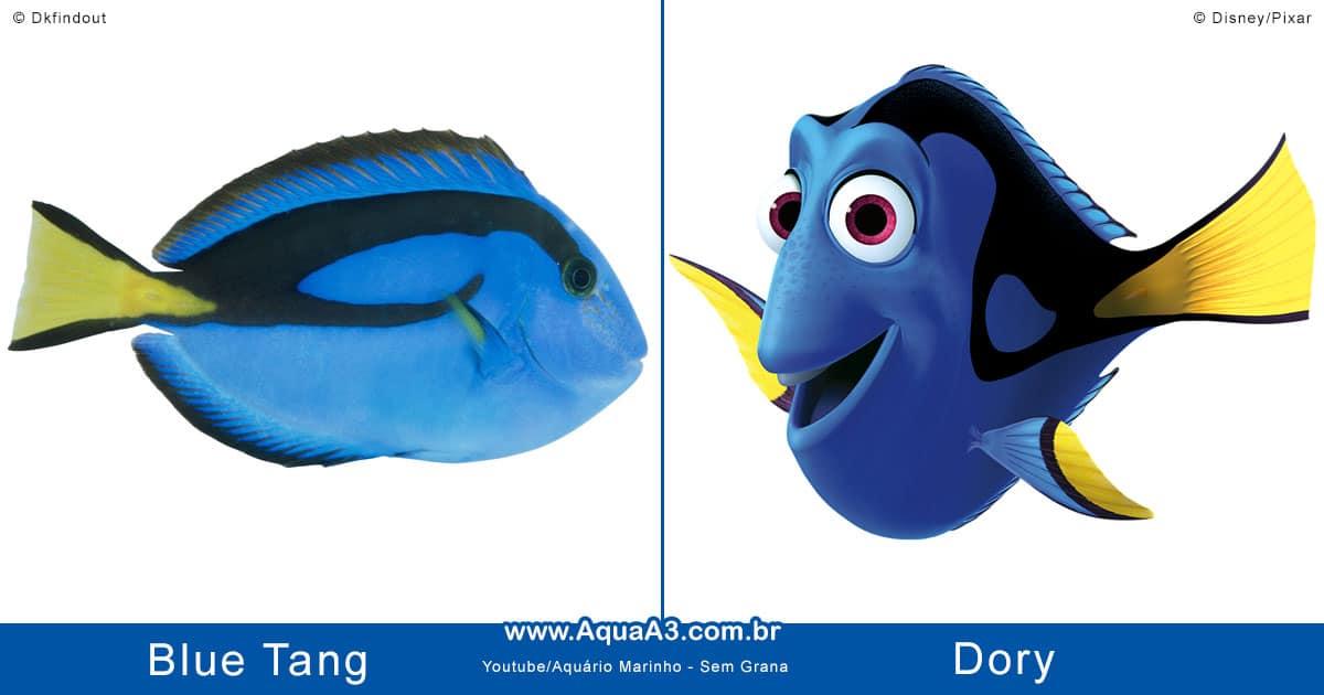Dory é o Blue Tang (Paracanthurus hepatus)