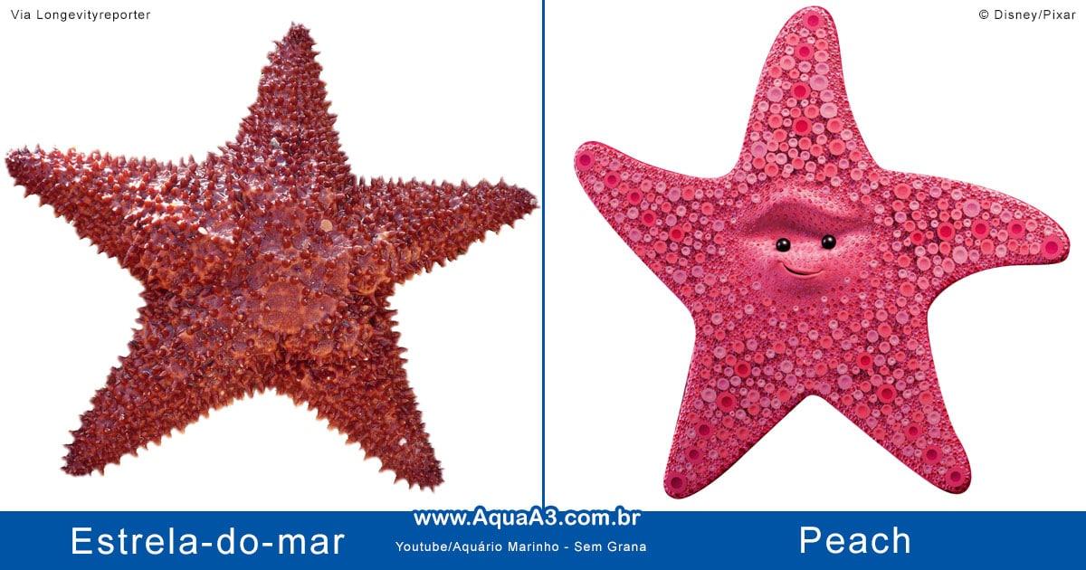 Peach e a estrela-do-mar