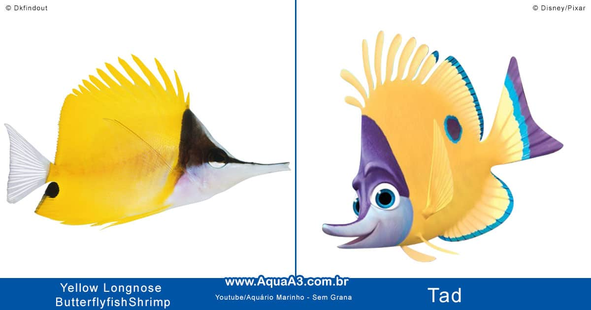 Tad é o Yellow Longnose Butterflyfish (Forcipiger flavissimus)
