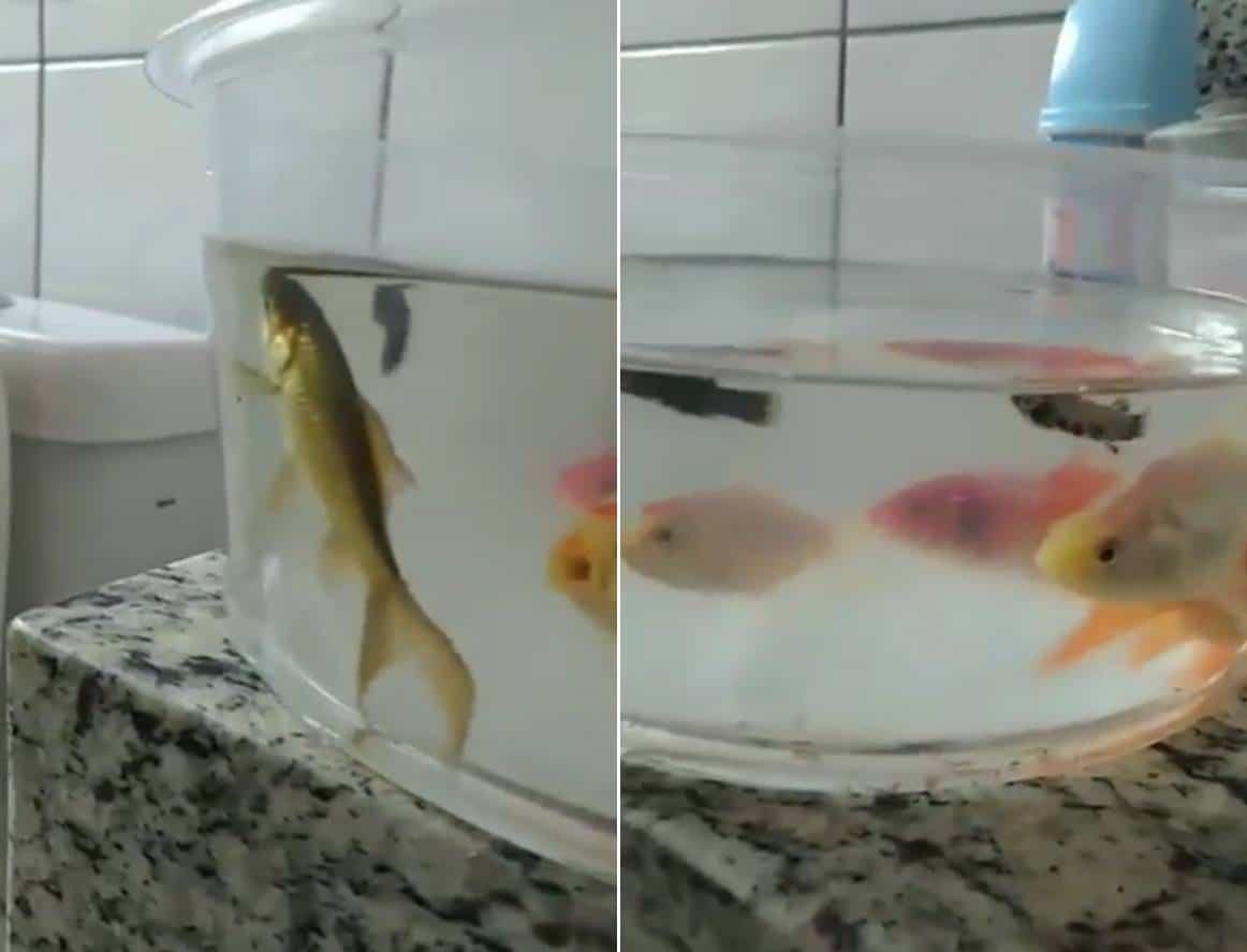 Youtuber Danilo Vieira Box do banheiro com água e peixes