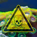 Palitoxina o perigo do coral zoanthus • Palitoxina: o perigo do coral zoanthus