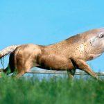Cavalo seria o novo ancestral do peixe • Cavalo seria o novo ancestral do peixe, diz professor