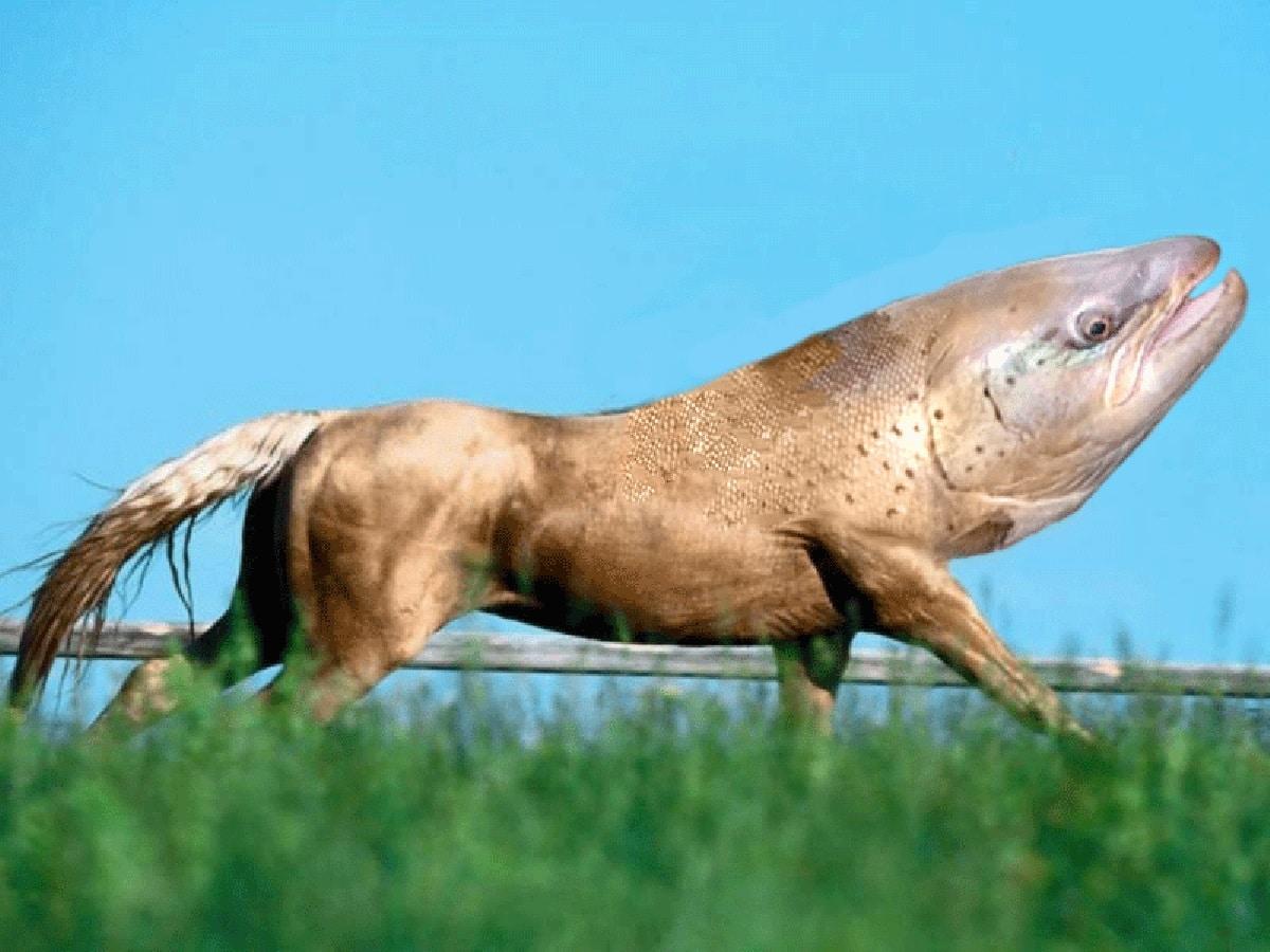 Cavalo seria o novo ancestral do peixe