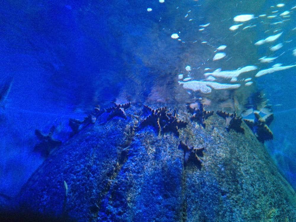 estrelas-do-mar