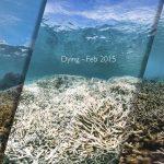 Chasing Coral • Sobre Chasing Coral - Em busca dos corais