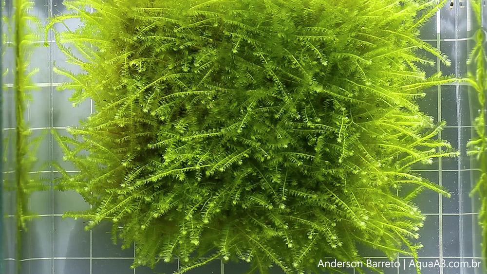 Evolução dos musgos em tela inox