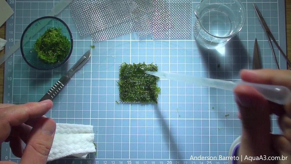 Goteje um pouco de água no musgo