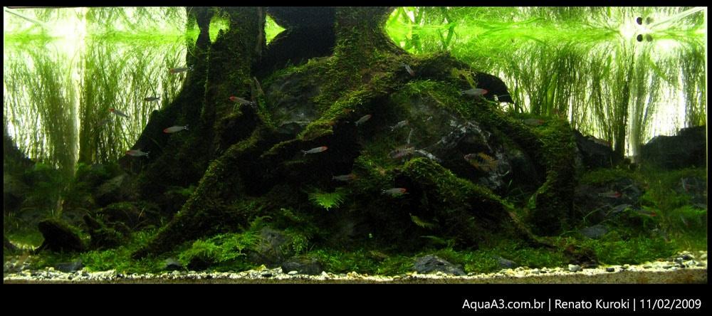 The Ancient Forest foto tirada em 12/02/2009