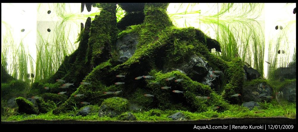 The Ancient Forest foto tirada em 12/01/2009