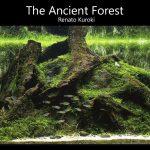 The Ancient Forest em detalhes por Renato Kuroki • The Ancient Forest em detalhes por Renato Kuroki