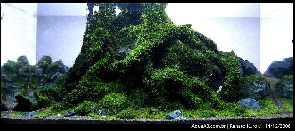The Ancient Forest foto tirada em 14/12/2008