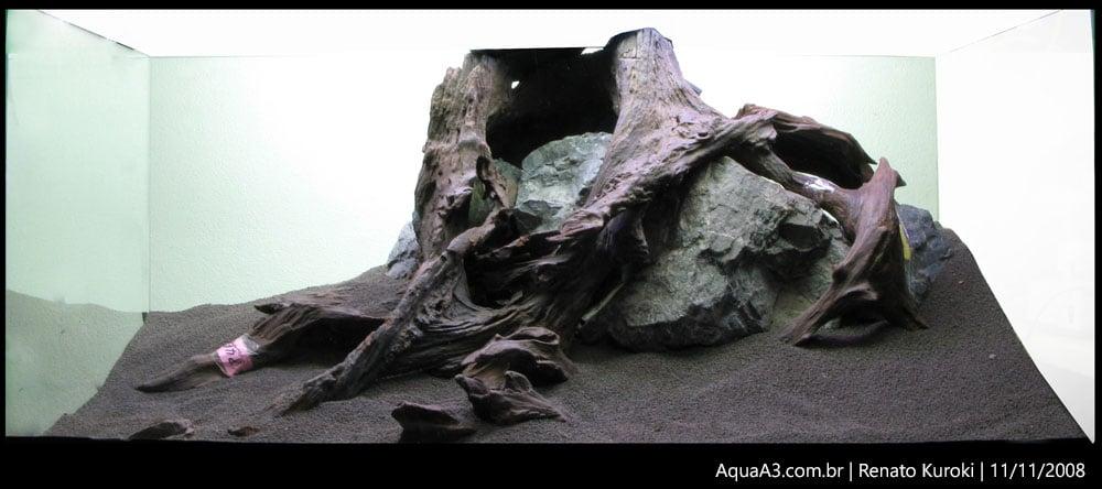 The Ancient Forest foto tirada em 11/11/2008