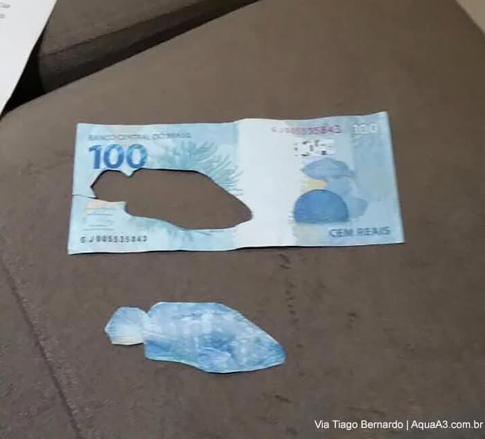 cédula de 100 reais com o peixinho recortado