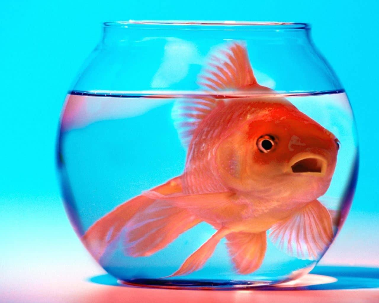 Aquários pequenos são mais propicios a depressão dos peixes