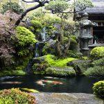 Amazing Garden koi • Os 10 principais erros na construção de um lago ornamental