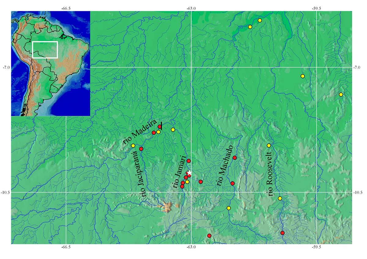 Mapa de distribuição do S. curupira (círculos vermelhos) e do Satanoperca jurupari (círculos amarelos) na bacia do rio Madeira.