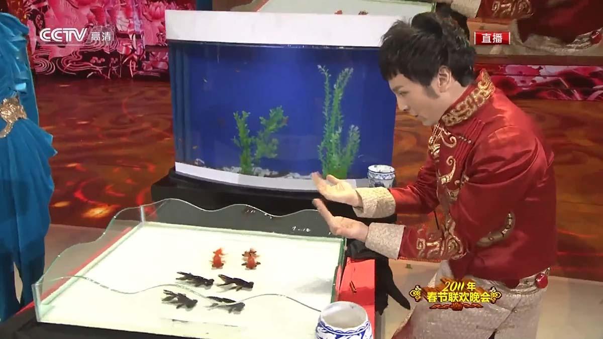 Mágica com peixes kinguios