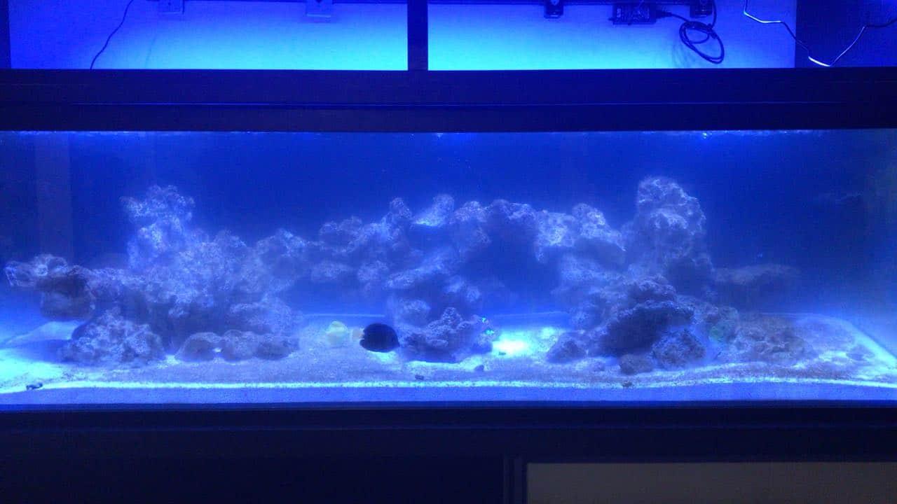 água leitosa no aquário