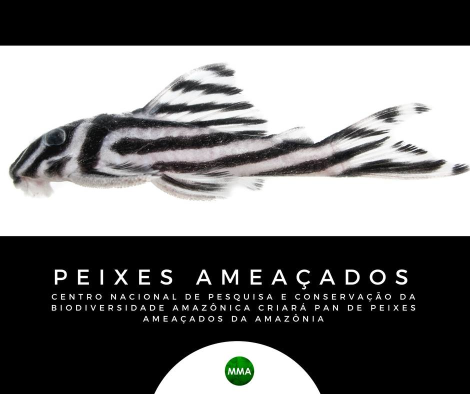 Conservação dos Peixes Ameaçados da Amazônia