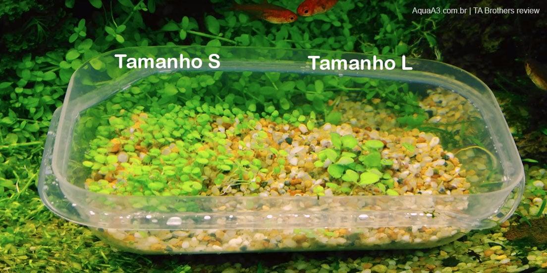 Evolução sementes da Glossostigma