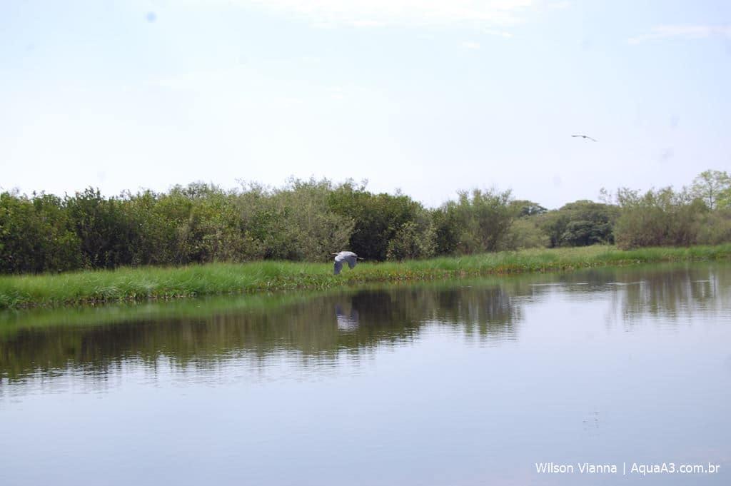 Paisagem Pantanal Mato-Grossense