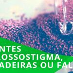 Sementes Glossostigma verdadeiras falsas • Sementes de Glossostigma, verdadeiras ou falsas?