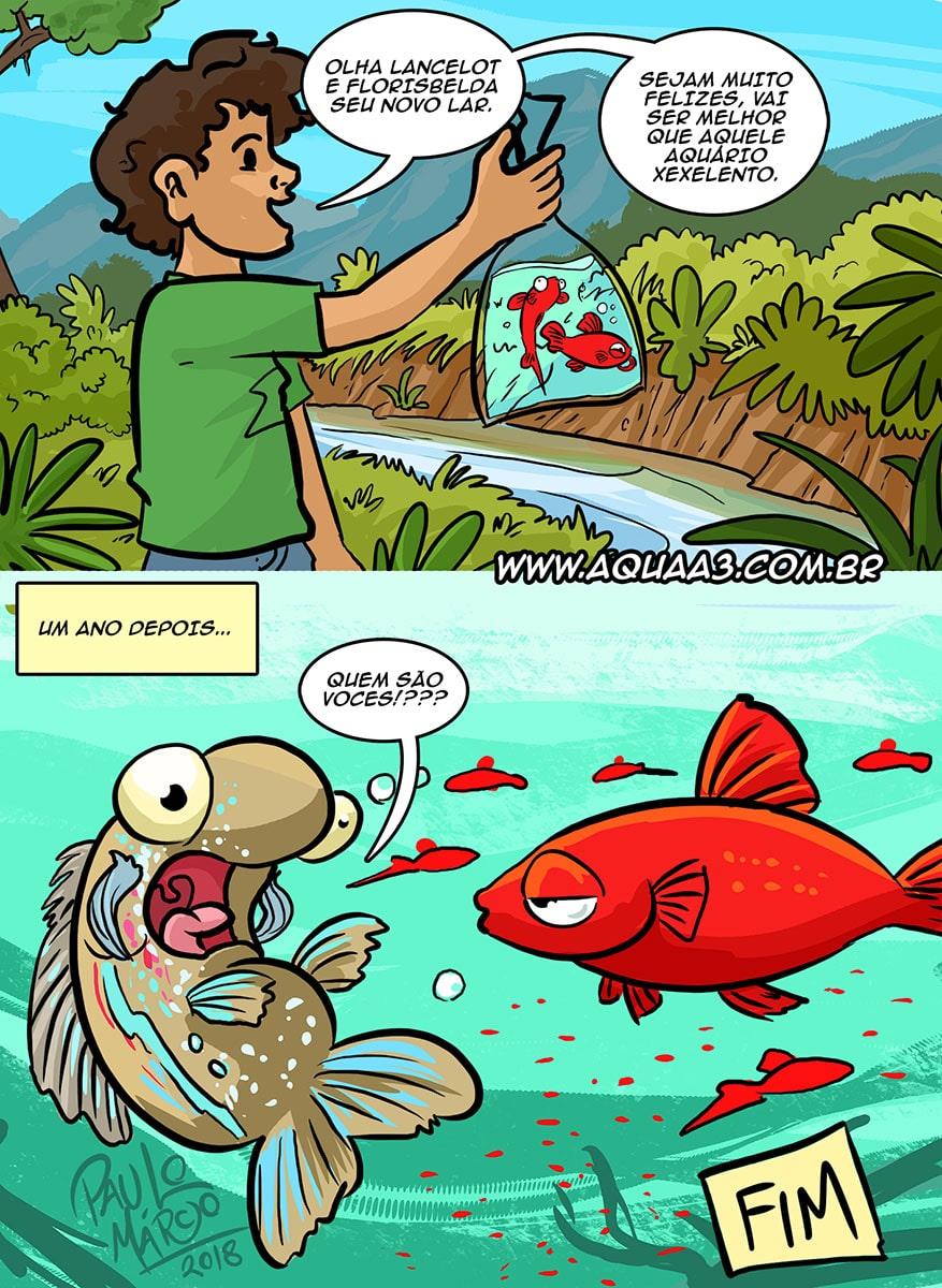 Peixes ornamentais ameaçam a biodiversidade