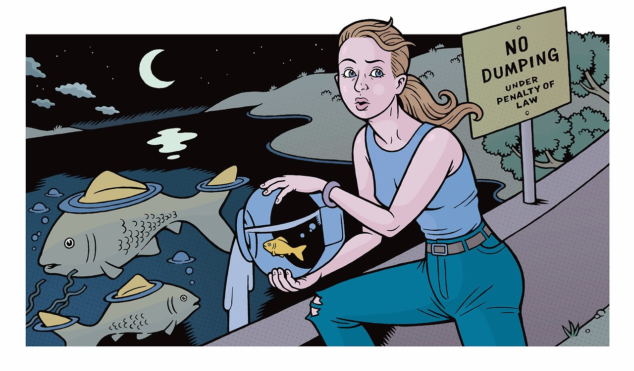 Peixes ornamentais invasores • Peixes ornamentais exóticos ameaçam a biodiversidade