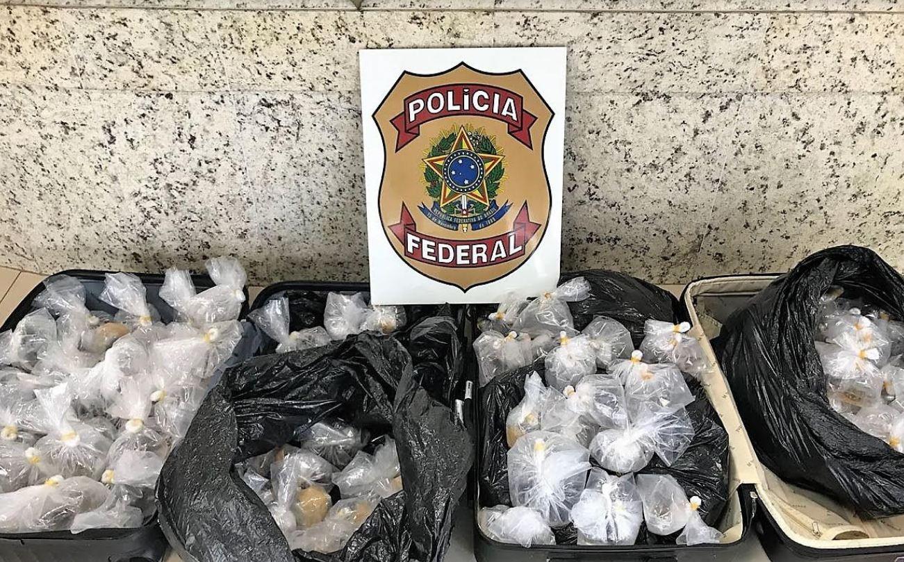 Polícia Federal apreende 550 peixes ornamentais!