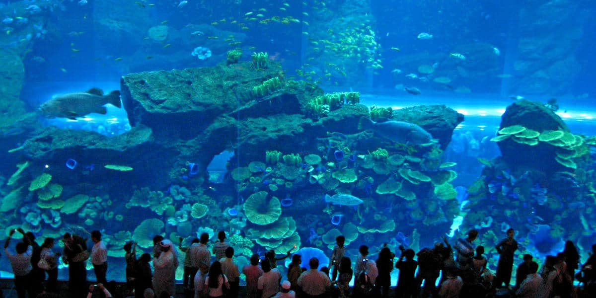 Turkuazoo Turquia • Os 5 maiores aquários do mundo