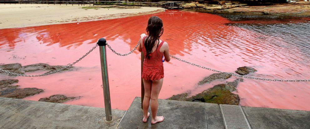 Garota olha para a maré vermelha na praia de Clovelly em 27 de Novembro, 2012 em Sydney, Austrália.