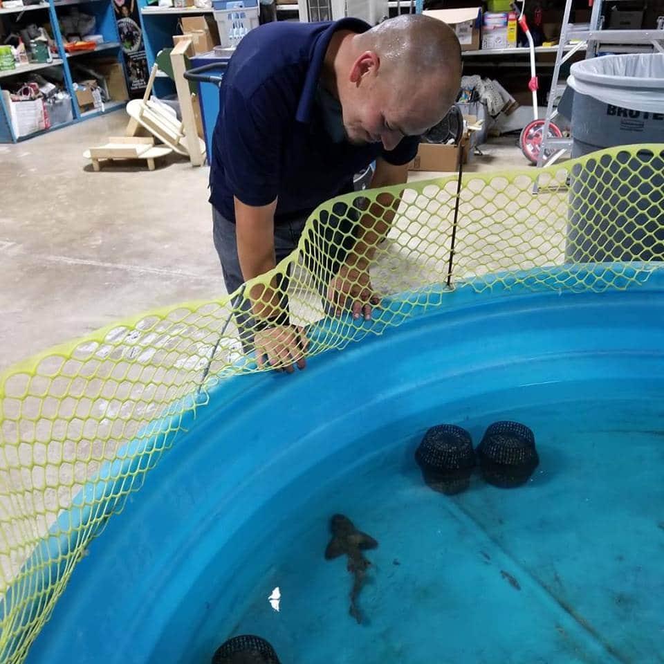 Tubarão é roubado de aquário no Texas disfarçado de bebê