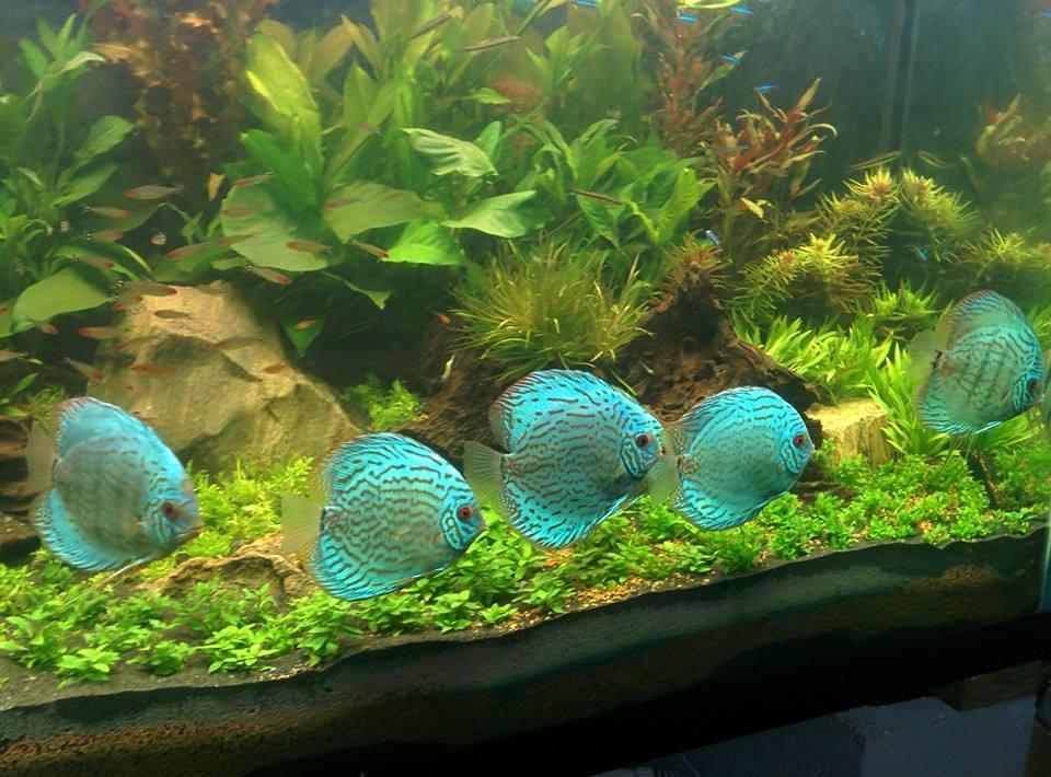Wattley Turquoise