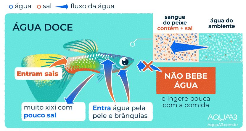 Os peixes de água doce bebem água?
