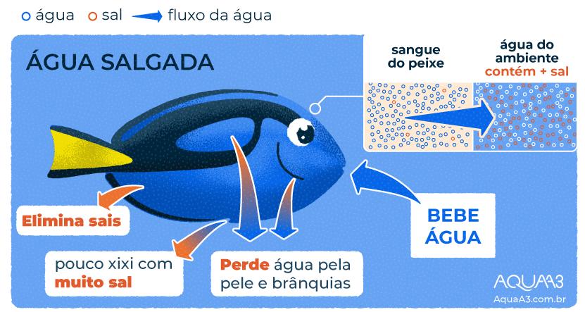 Os peixes de água do mar bebem água?