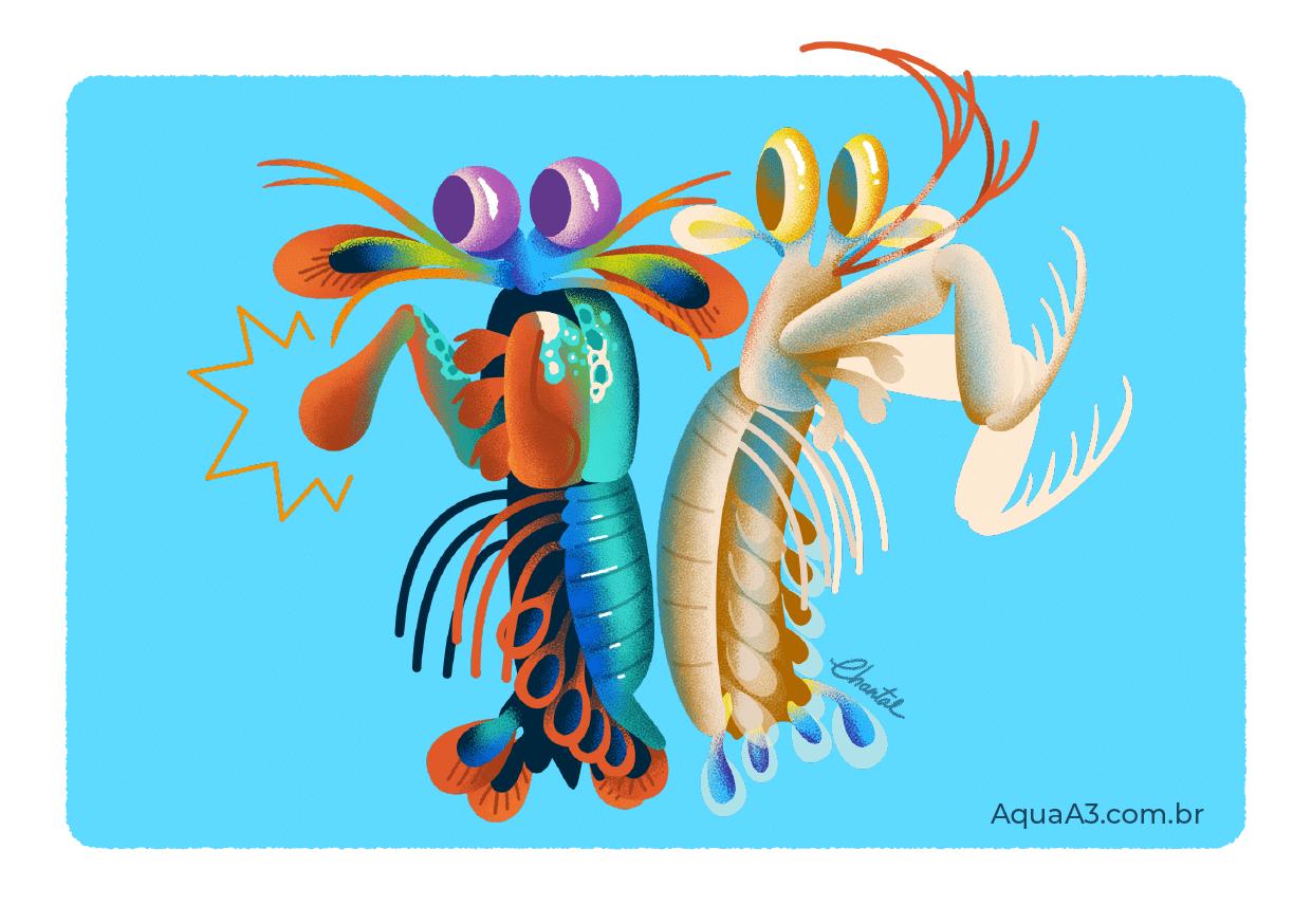 Camarão Mantis é um perfurador e esmagador