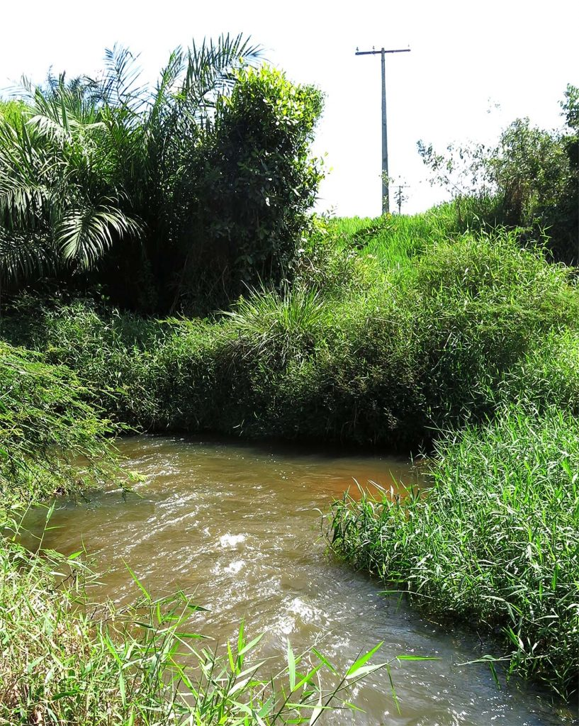 Rio Jacuípe, habitat do Parotocinclus jacumirim