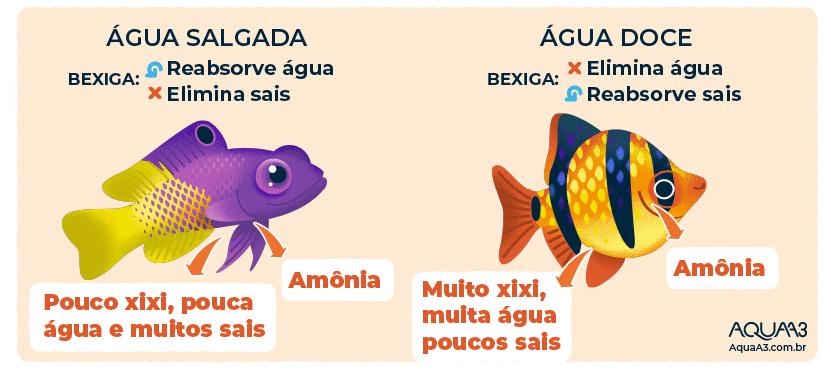 Diferenças entre o xixi do peixe de água doce e salgada